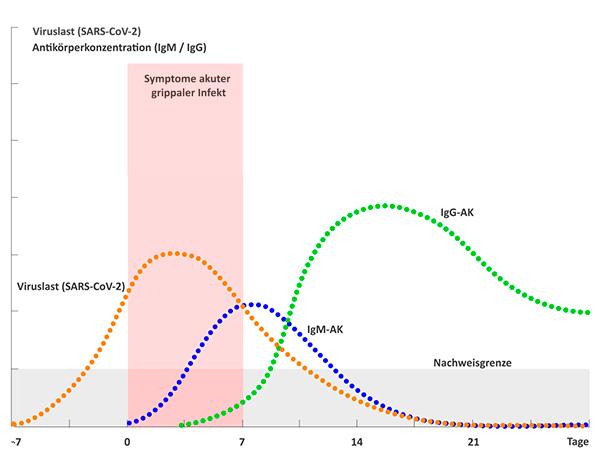Verlauf Virus- und Antikörperkonzentration